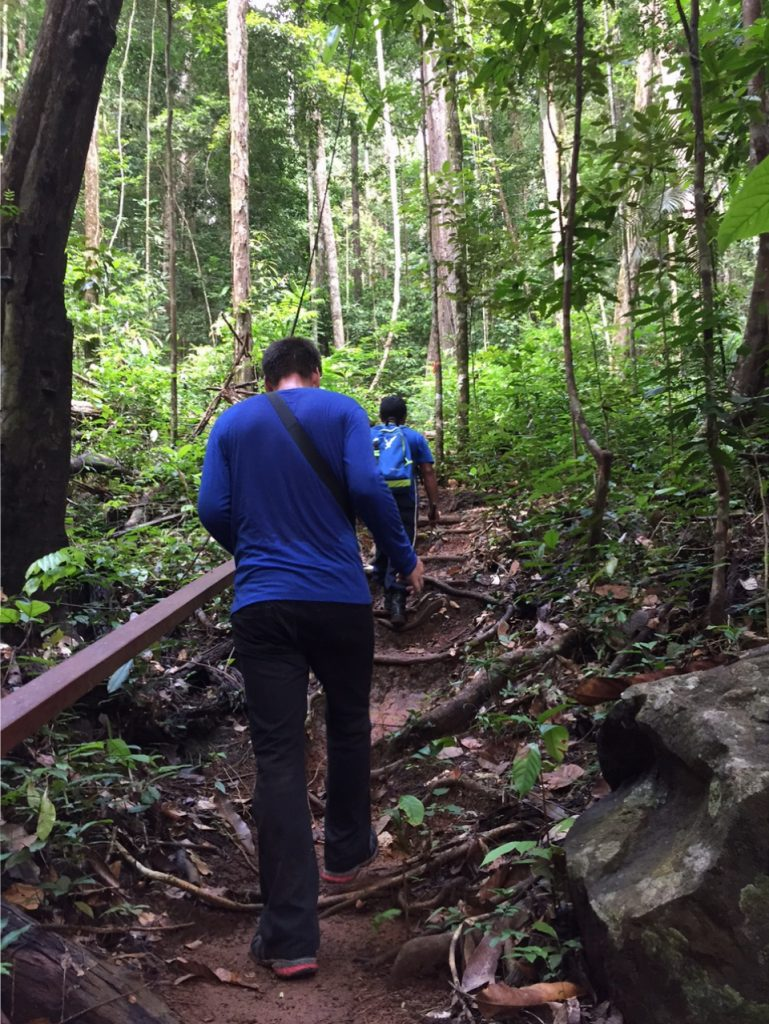 Going deep into the jungle on the Turtle Mountain trail